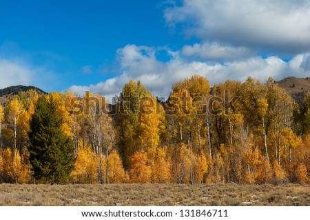 A row of very colorful trees in Idaho near Sun Valley in the Fall - stock photo