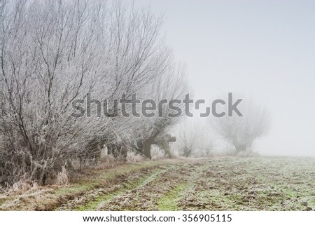 A row of willows with hoarfrost
