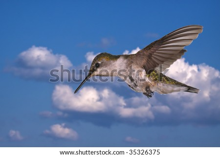 A Ruby throated hummingbird against the sky - stock photo