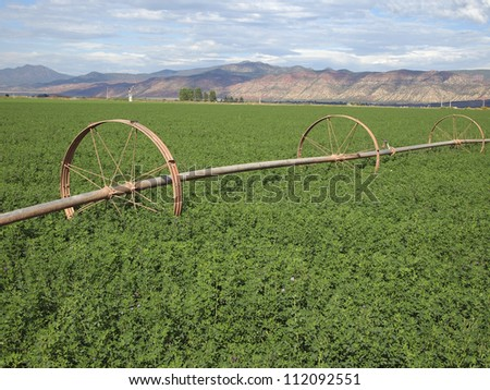 A rural alfalfa field with a wheeled irrigation line. - stock photo