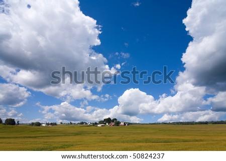 A rural American cornfield in Iowa - stock photo