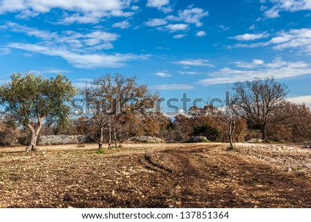 a rural and barren landscape with some mediterranean trees