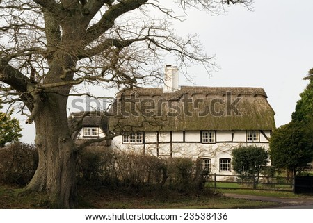 A rustic old thatched English house with a tree