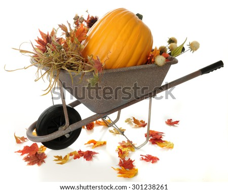 A rustic wheelbarrow full of fall foliage and a large pumpkin.  Colorful fall leaves have fallen around the wheelbarrow.  On a white background. - stock photo