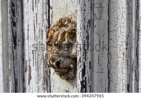 A rusty lion head door emblem on a peeling white door - stock photo