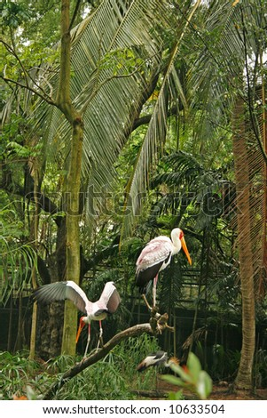 A Saddlebill stork, standing in the twigs - stock photo