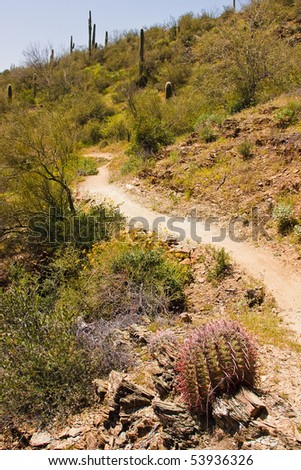 A saguaro cactus near a trail in an Arizona desert is surrounded by wildflowers and other plants. - stock photo