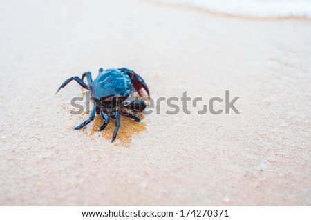 A Sand Crab on a white sandy beach