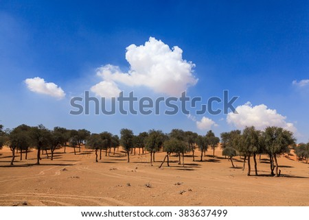 A sand dune with trees close to Sharjah, UAE in an off road track with wider angle and more sky visible.