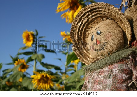 A scarecrow smiles in a Sunflower Forest. - stock photo
