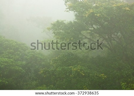 A scene of a tropical jungle canopy in dense fog in Costa Rica - stock photo