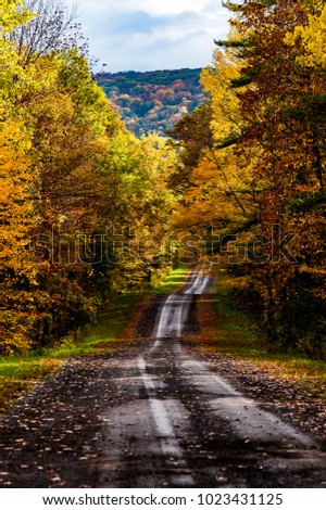 A scenic, autumn view of a winding dirt and gravel road within the Connecticut Hill Wildlife Management Area in the Finger Lakes of New York.