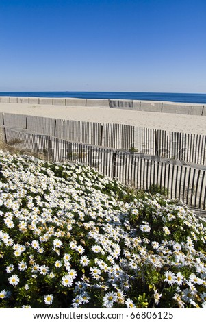 A Scenic Beach Scene with a Thousand Daisies. - stock photo