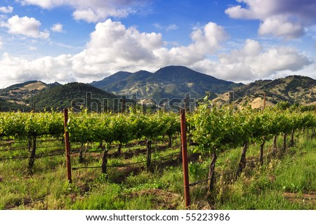 A scenic Napa Valley vineyard at the base of a mountain.