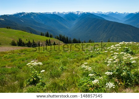 A scenic overlook at Hurricane Ridge in Olympic National Park - stock photo