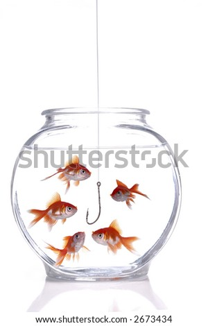 A school of fish gawk at a fish hook hanging in a fish bowl. White background.