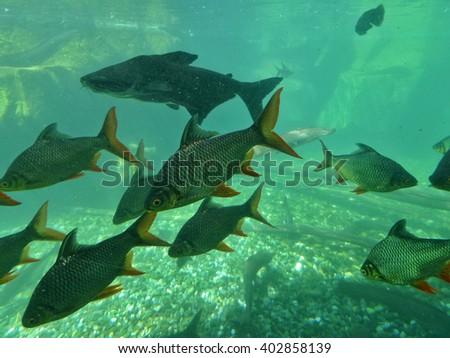 A School of Fish In Aquarium - stock photo