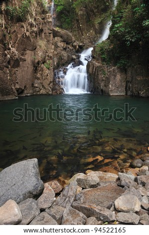 A school of Mahseer Barb fish in Pliew Waterfall National Park, Chanthaburi, Thailand. (3) - stock photo