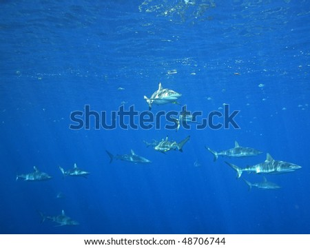 a school of sharks swimming near the oceans surface with sunbeams shining through the water with negative space for your text