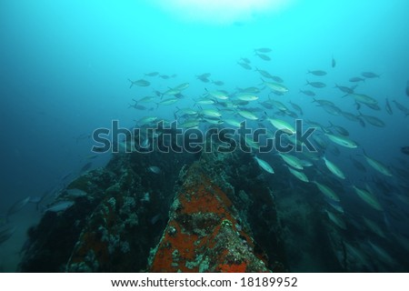 A school of tropical fish swimming over rocks under the sun