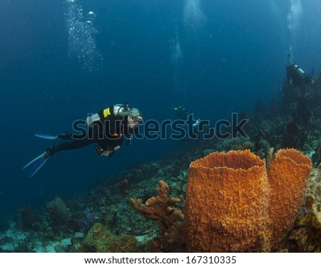 A Scuba Diver checks out the sponges in St. Lucia - stock photo