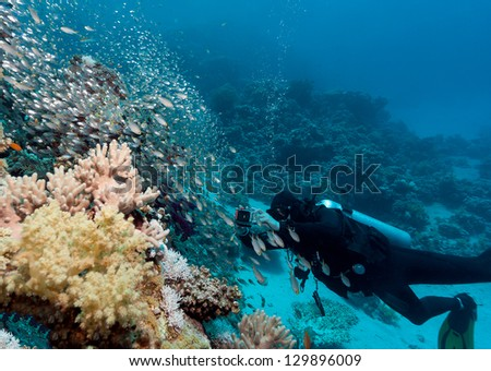 A SCUBA diver with a camera looks at a shoal of fish near coral - stock photo