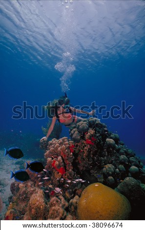 A scuba diving girl in a bikini poses above the coral reef in the warm waters at St. Croix Island in US Virgin Islands. - stock photo