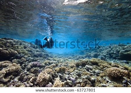 A scubadiver swim in lagoon with coral floor and translucide water - stock photo