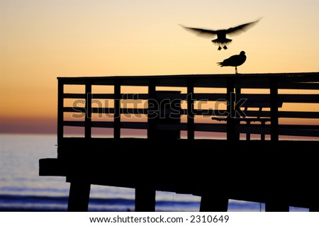 A sea gull caught in flight just before she lands on the pier. A nice silhouette and a hint of motion blur make the photo unique.