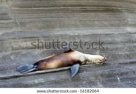 A Sea Lion rests on the rocky cliff side - stock photo