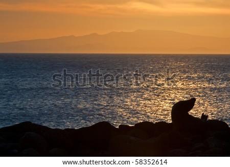 a sea lion silhouette against a sunset landscape in bartholomew island, galapagos - stock photo