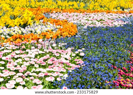 A sea of various gorgeous spring flowers (daffodil, pansy, forget-me-not) - stock photo