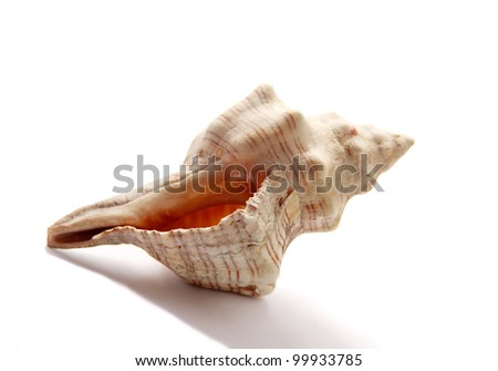 A sea shell isolated on white background - stock photo