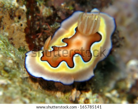 A sea star dancing on the sandy bottom in beautiful shallow lagoon - stock photo
