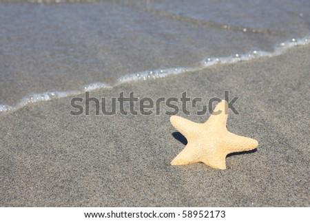a sea star on the beach - stock photo