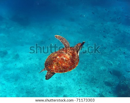 a sea turtle swimming in the ocean - stock photo