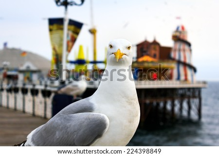 A seagull at Brighton, UK. Shallow depth of field. Focus on the eyes. - stock photo