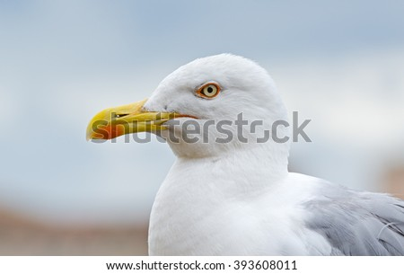A seagull detail shot on the Forum Romanum during summertime in Rome, Italy