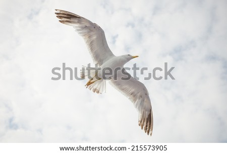 A seagull flying above with a huge wingspan and a cloudy sky - stock photo