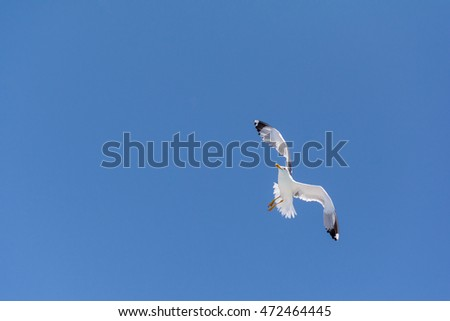 A Seagull flying, isolated on blue sky