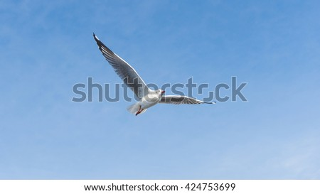 A Seagull flying over The Blue Sky with Clouds and Landscape Looking Left Blue Sky Background with Clouds for nature background. - stock photo