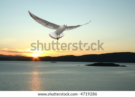 a seagull flying over the sea - beautiful landscape from norwegian fjords - stock photo
