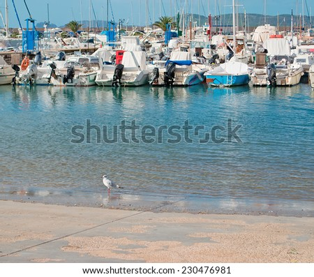a seagull in the ramp of Alghero port - stock photo