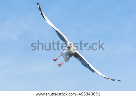 A Seagull is Diagonally Flying in The Sky Searching for Food with Nice Blue Sky and Clouds for Nature Backgrounds - stock photo