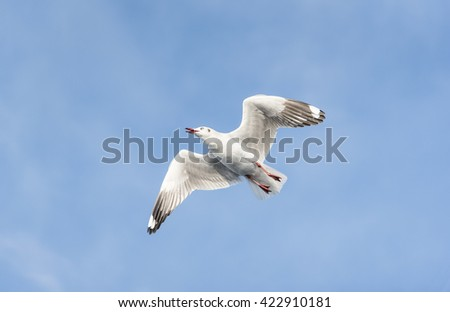 A Seagull is flying from bottom right to upper left side with blue sky and clouds for nature backgrounds. - stock photo