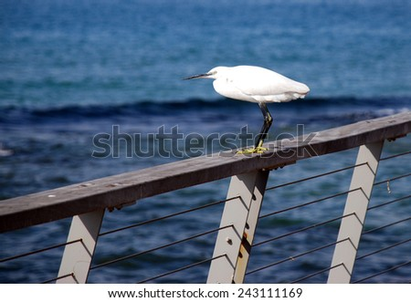 A Seagull on a rail by the sea - stock photo