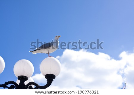 A seagull perched a lamp set against a bright blue sky - stock photo