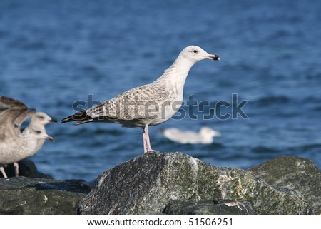 A seagull resting on a rock at the beach