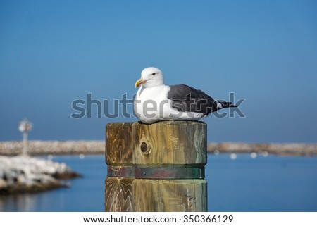A seagull sits on top of the timber post with boats in the background. - stock photo
