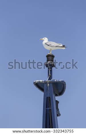 A seagull standing on a mast. - stock photo